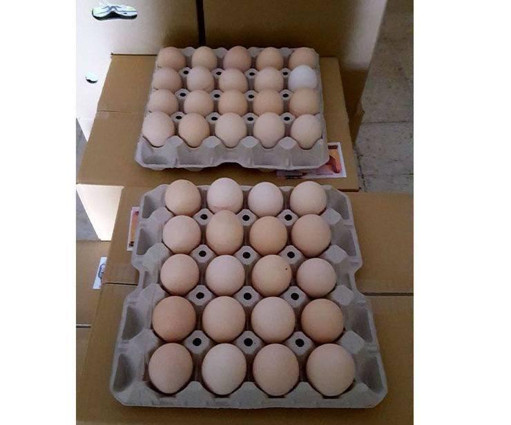 Mayoristas de huevos en San Adrián de Besós