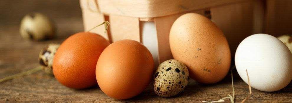 Venta de huevos para hostelería y alimentación en El Maresme