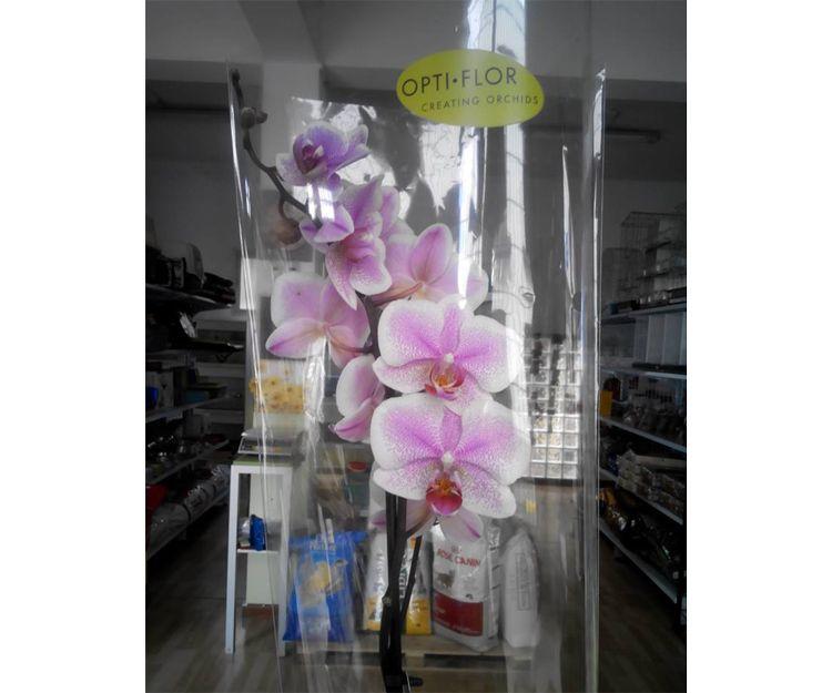 Orquídeas frescas