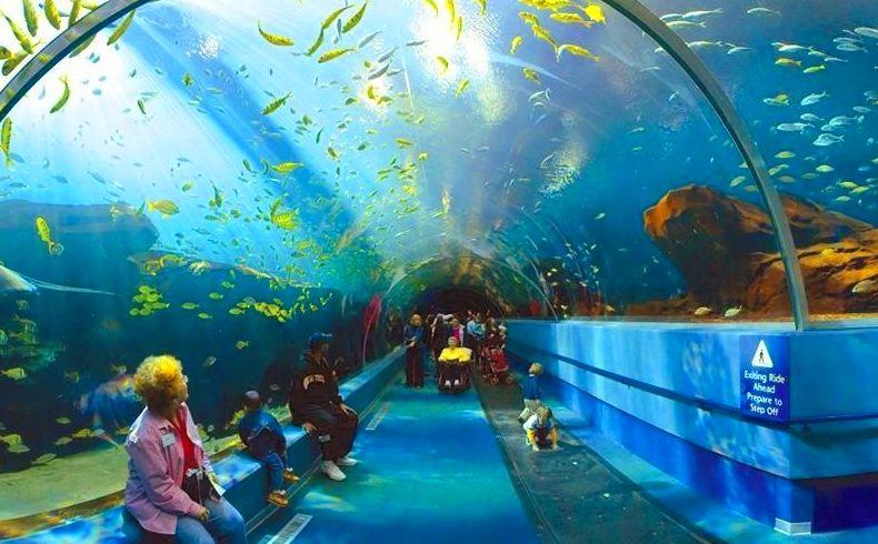 Venta de entradas para el acuario de Gijón
