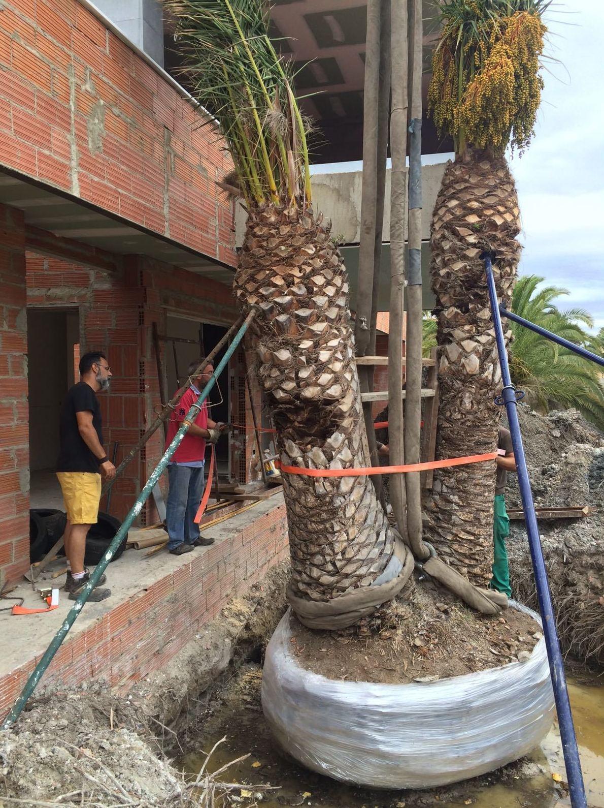 Trabajos de jardinería valencia