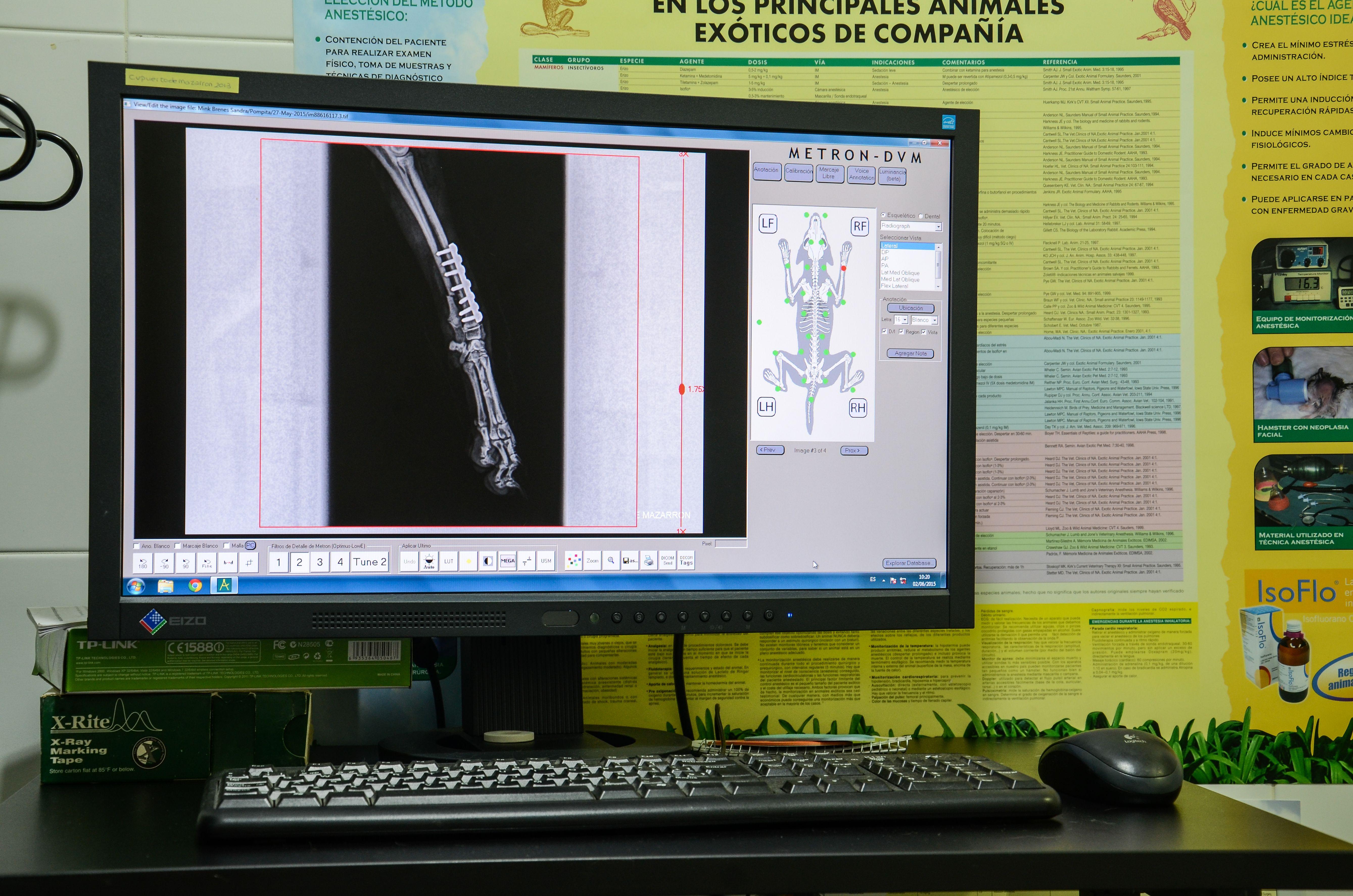 Foto 10 de Veterinarios en Mazarrón   Clínica principal Veterinaria Puerto Mazarrón