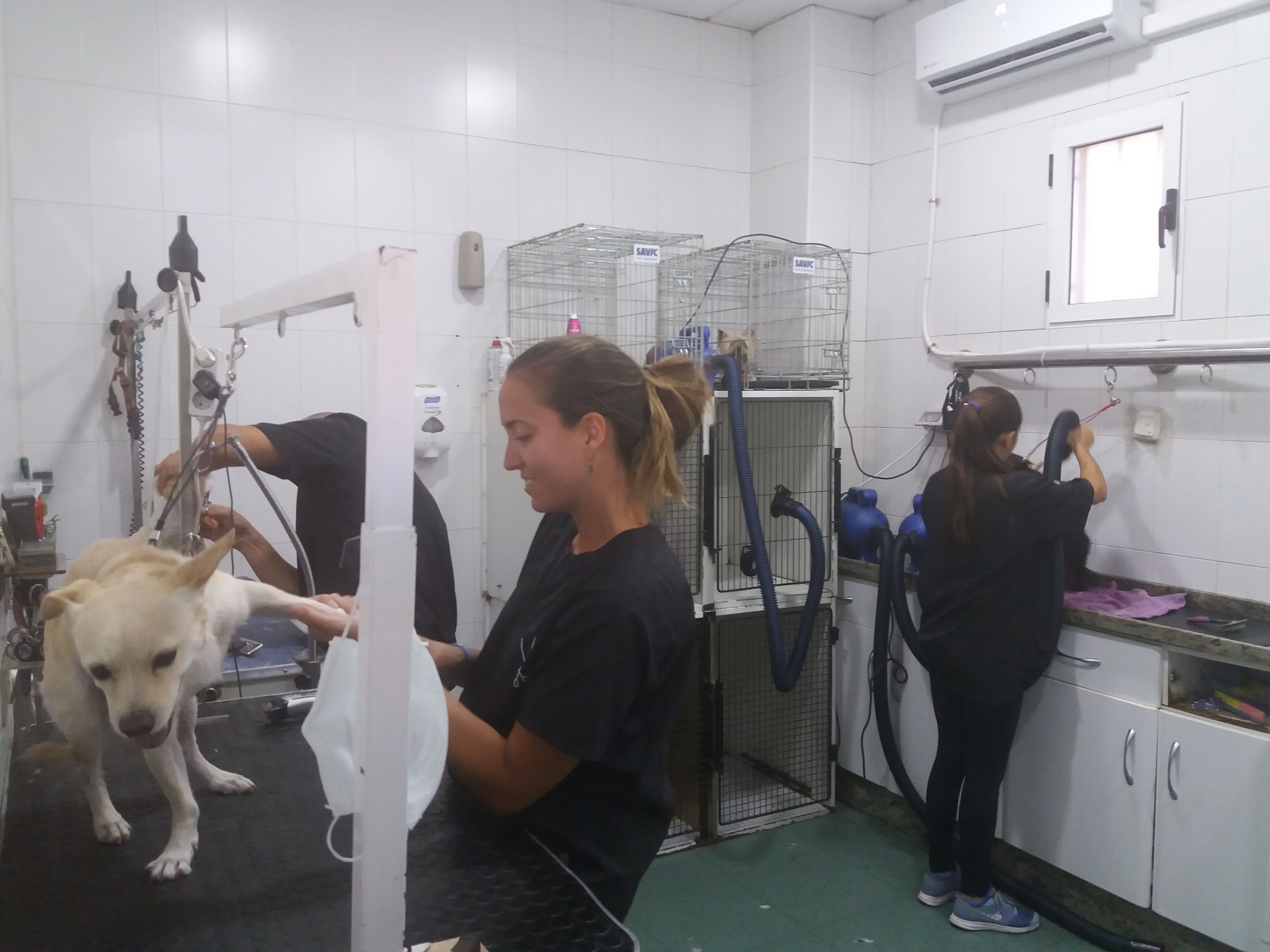 Peluquería: Servicios de Clínica principal Veterinaria Puerto Mazarrón