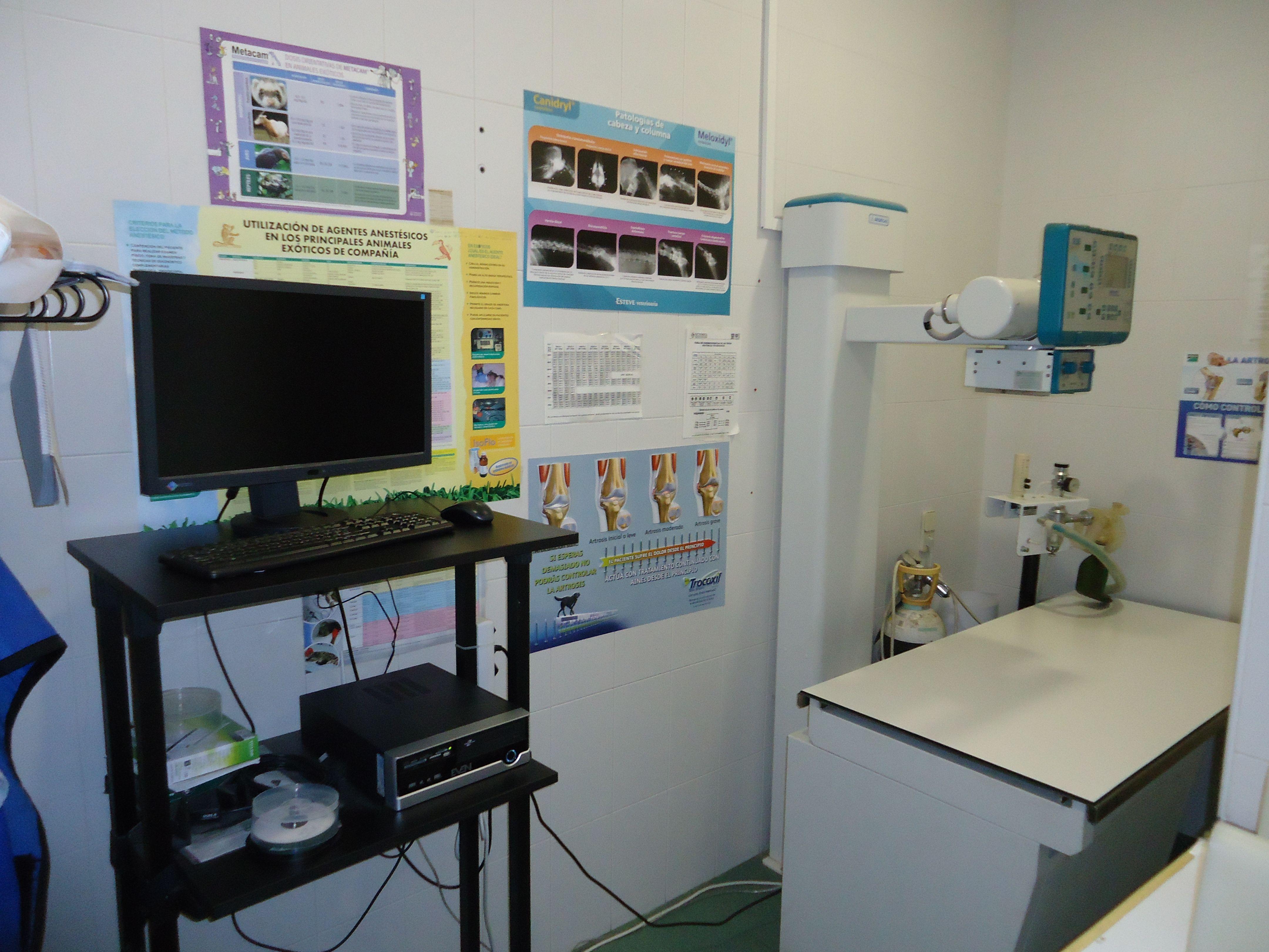Radiología digital: Servicios de Clínica principal Veterinaria Puerto Mazarrón