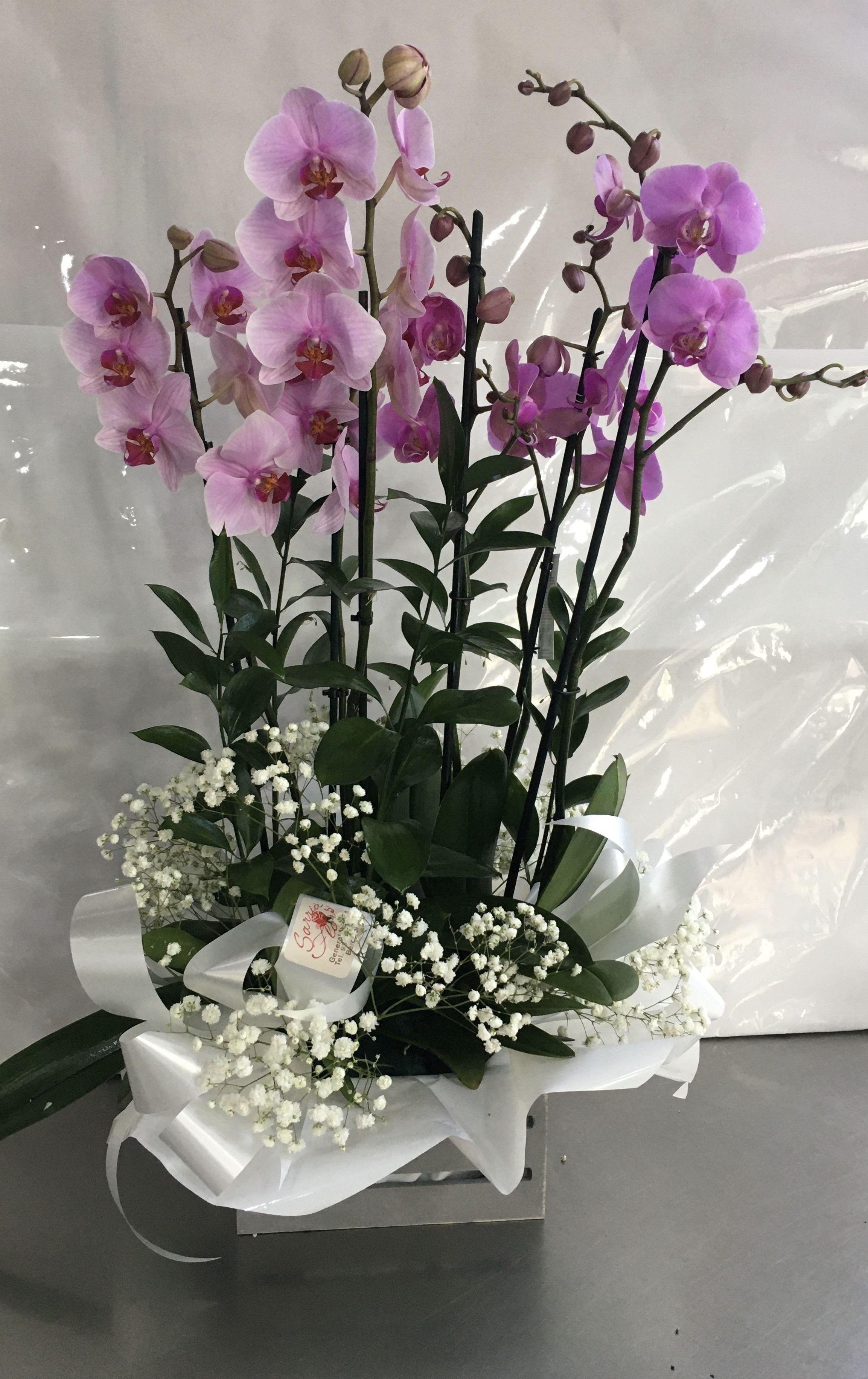 Centro de Orquídeas (color a elegir) 25 € cada uña desplazamiento incluido