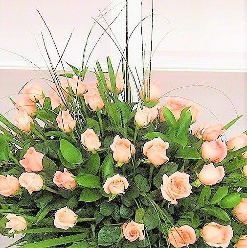 Variedad de rosas