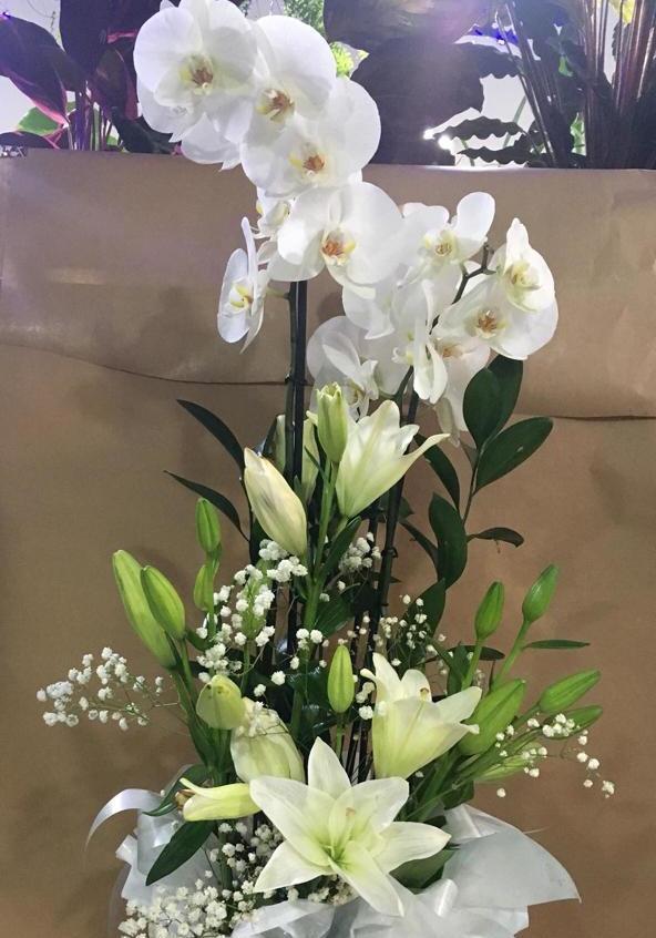 Orquídeas(color a elegir) 35 €, desplazamiento incluido