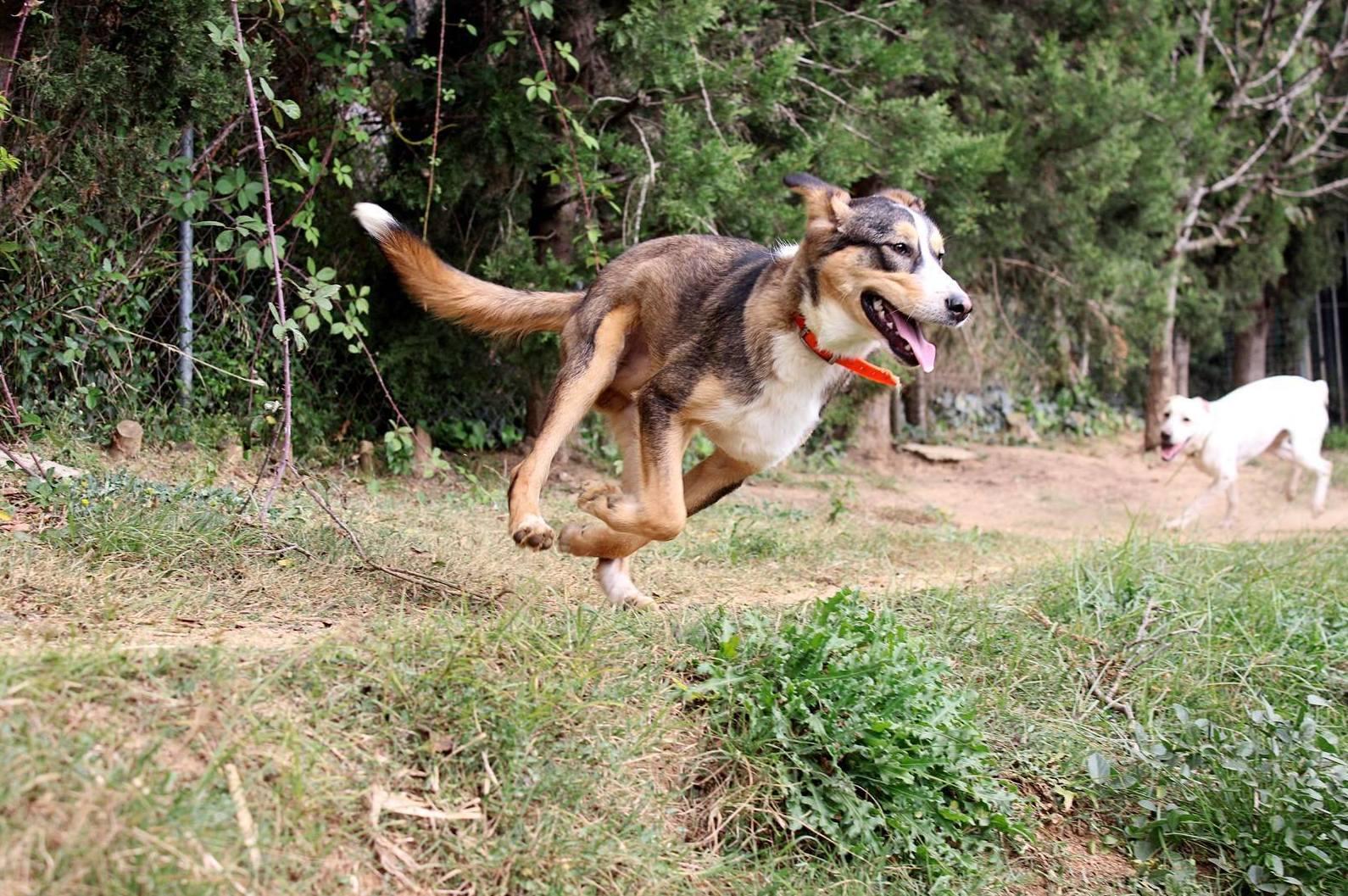 Foto 10 de Residencia canina y adopción en Canet de Mar | Centre Caní De Pedracastell