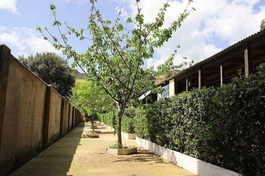 Foto 7 de Residencia canina y adopción en Canet de Mar | Centre Caní De Pedracastell