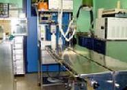 Otras cirugías: Servicios veterinarios de Clínica Veterinaria Canillas