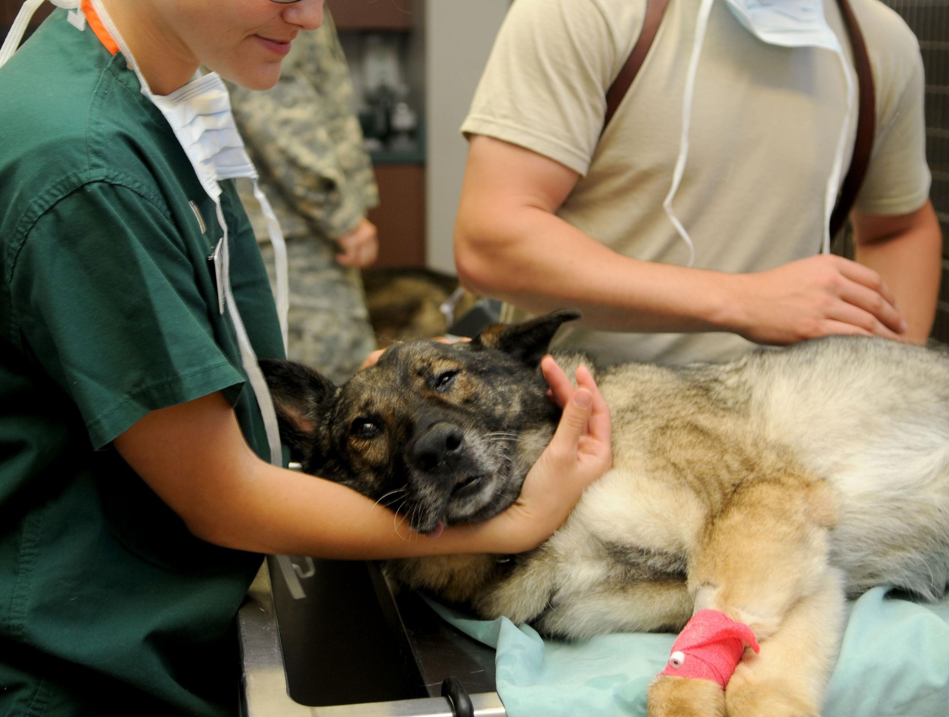 Medicina preventiva para perros y gatos en Madrid