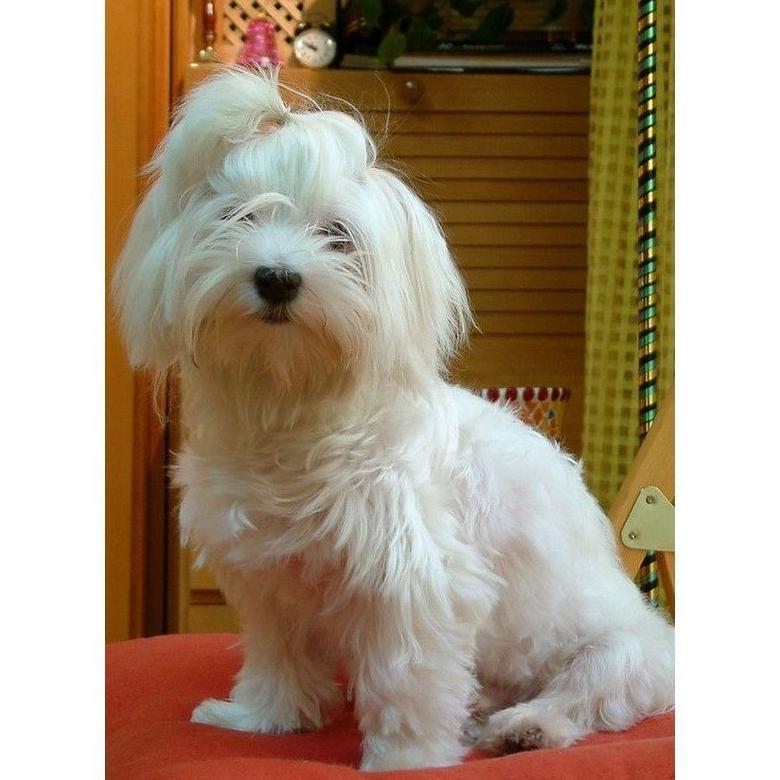 Peluquería: Servicios veterinarios de Clínica Veterinaria Canillas