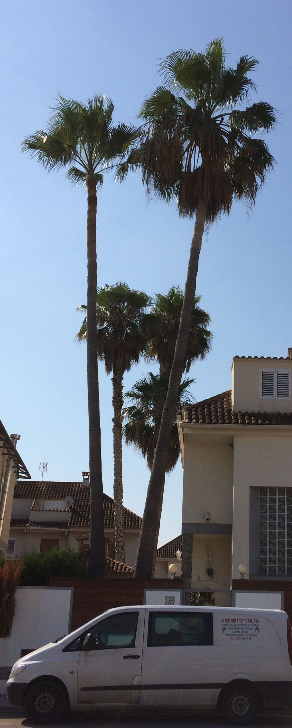 Foto 29 de Jardines (diseño y mantenimiento) en Valencia | Jardinería Vicente Salcedo