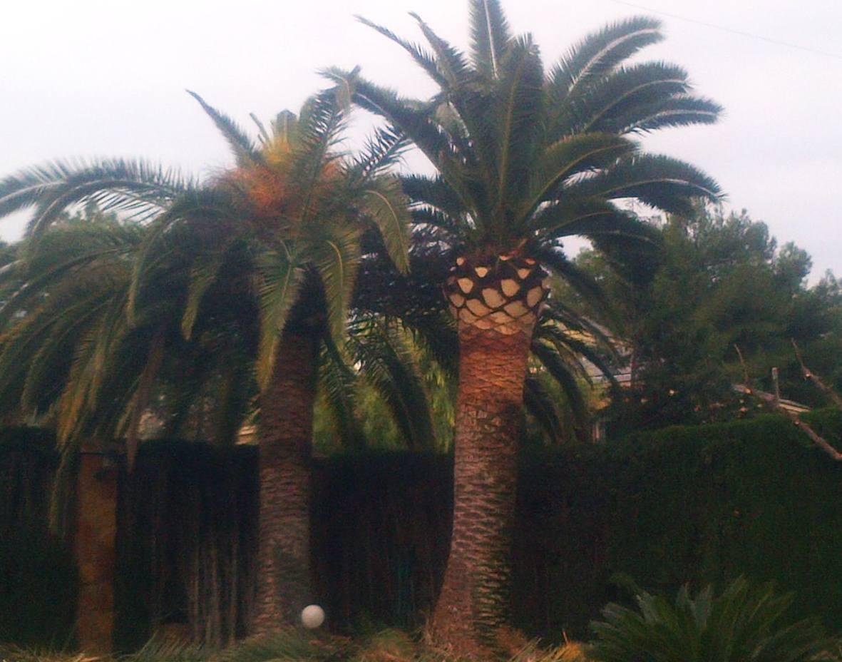 Foto 69 de Jardines (diseño y mantenimiento) en Valencia | Jardinería Vicente Salcedo