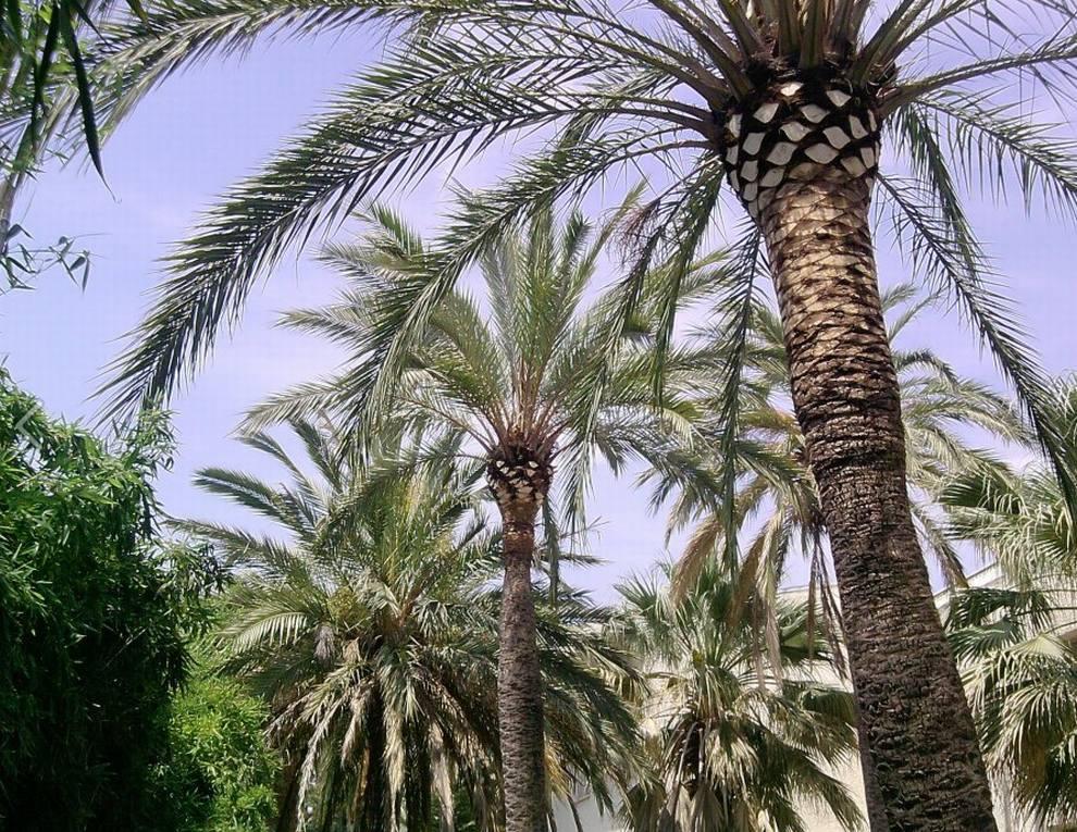 Foto 142 de Jardines (diseño y mantenimiento) en Valencia | Jardinería Vicente Salcedo