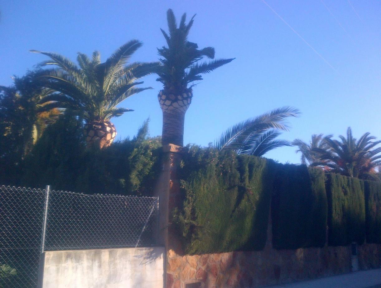 Foto 70 de Jardines (diseño y mantenimiento) en Valencia | Jardinería Vicente Salcedo
