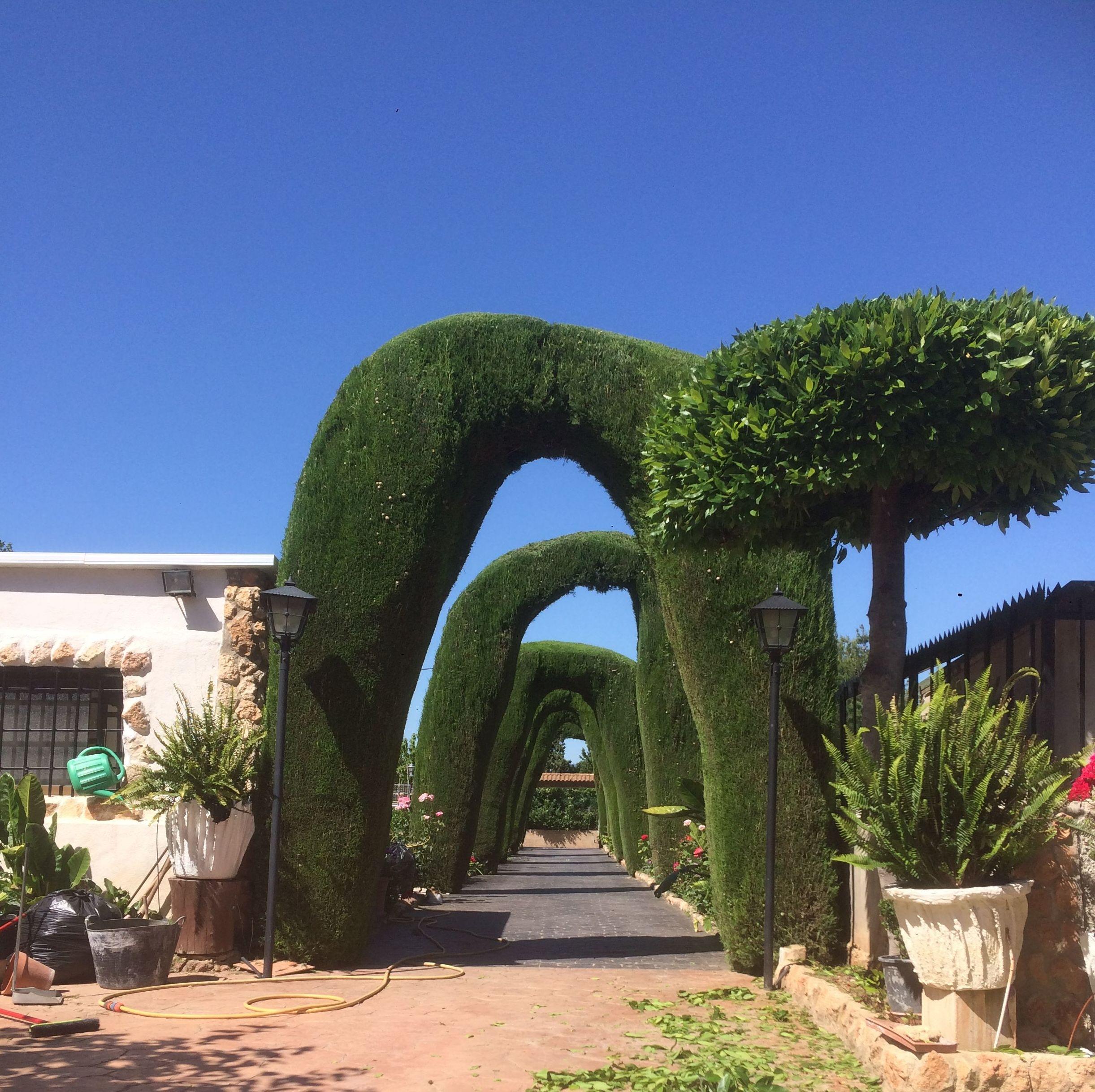 Foto 6 de Jardines (diseño y mantenimiento) en Valencia   Jardinería Vicente Salcedo