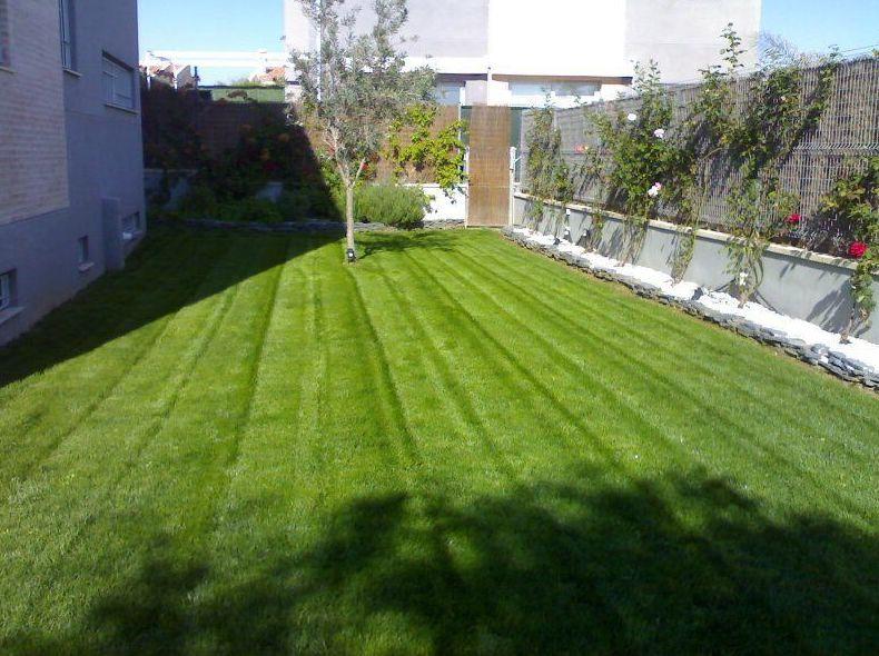 Foto 11 de Jardines (diseño y mantenimiento) en Valencia | Jardinería Vicente Salcedo