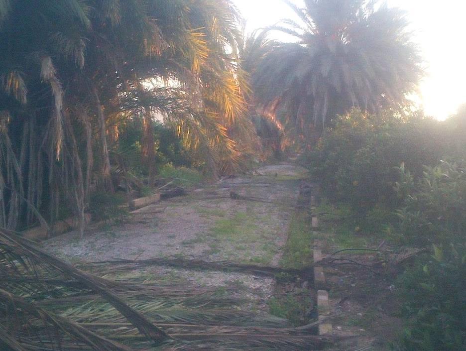 Foto 78 de Jardines (diseño y mantenimiento) en Valencia | Jardinería Vicente Salcedo