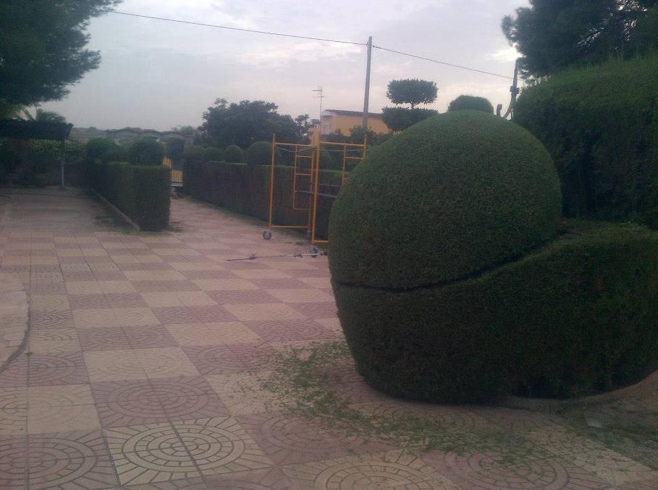 Foto 96 de Jardines (diseño y mantenimiento) en Valencia   Jardinería Vicente Salcedo
