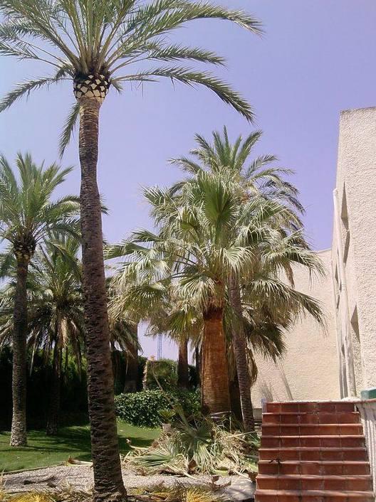 Foto 97 de Jardines (diseño y mantenimiento) en Valencia | Jardinería Vicente Salcedo