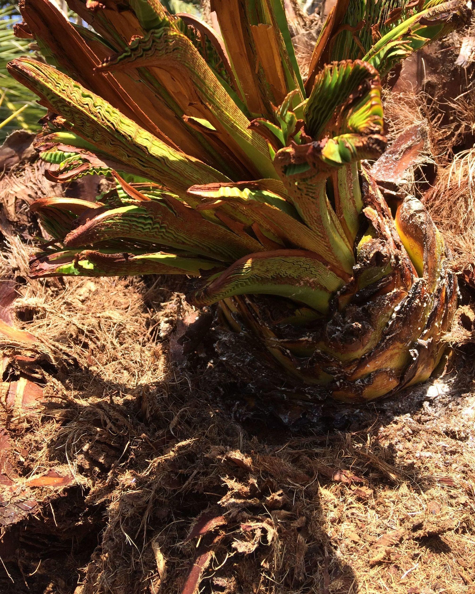 Foto 48 de Jardines (diseño y mantenimiento) en Valencia | Jardinería Vicente Salcedo
