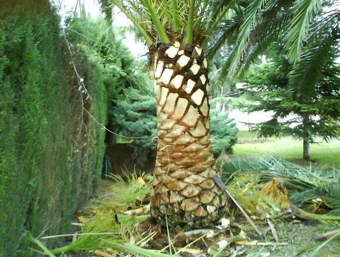 Foto 96 de Jardines (diseño y mantenimiento) en Valencia | Jardinería Vicente Salcedo