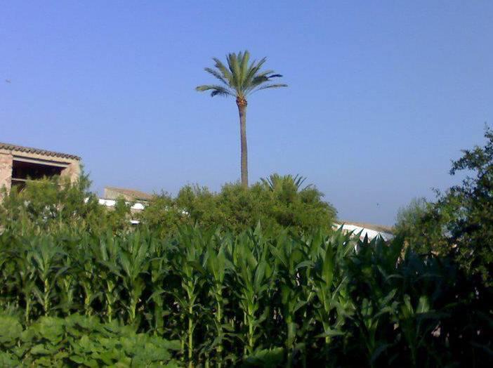 Foto 98 de Jardines (diseño y mantenimiento) en Valencia | Jardinería Vicente Salcedo
