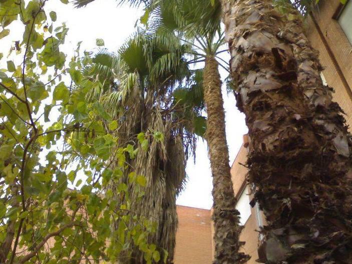 Foto 99 de Jardines (diseño y mantenimiento) en Valencia | Jardinería Vicente Salcedo