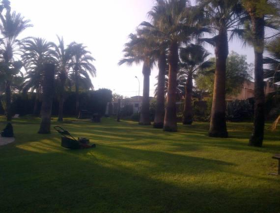 Foto 102 de Jardines (diseño y mantenimiento) en Valencia | Jardinería Vicente Salcedo