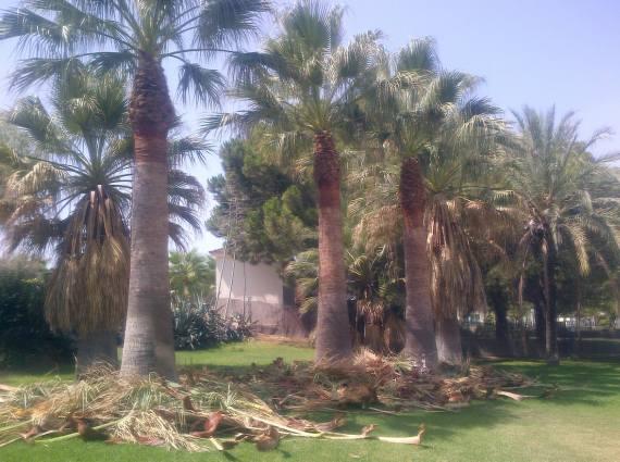 Foto 105 de Jardines (diseño y mantenimiento) en Valencia | Jardinería Vicente Salcedo