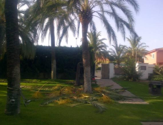 Foto 107 de Jardines (diseño y mantenimiento) en Valencia | Jardinería Vicente Salcedo