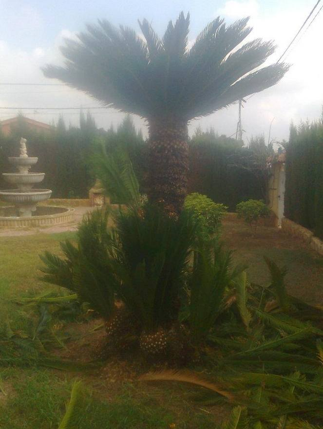 Foto 126 de Jardines (diseño y mantenimiento) en Valencia | Jardinería Vicente Salcedo