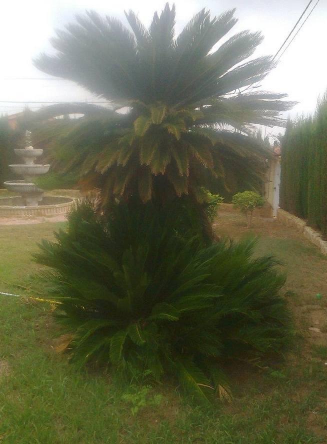 Foto 127 de Jardines (diseño y mantenimiento) en Valencia | Jardinería Vicente Salcedo