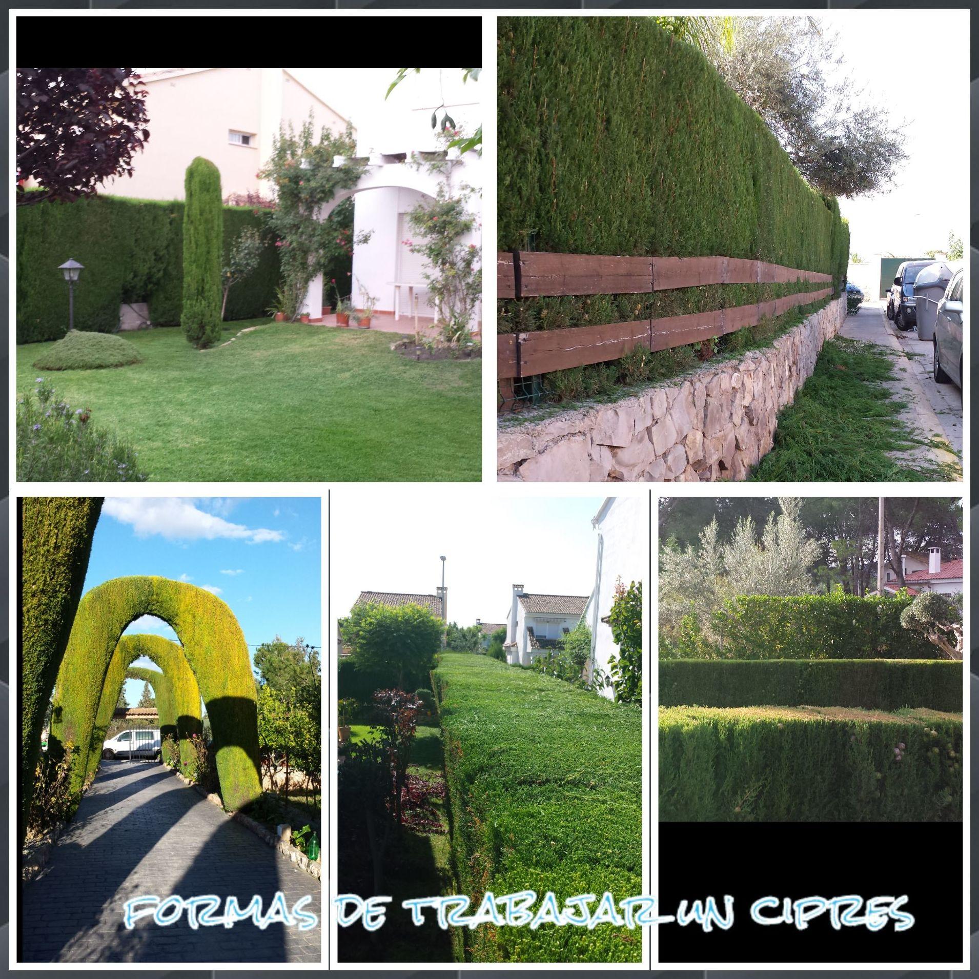 Foto 157 de Jardines (diseño y mantenimiento) en Valencia | Jardinería Vicente Salcedo