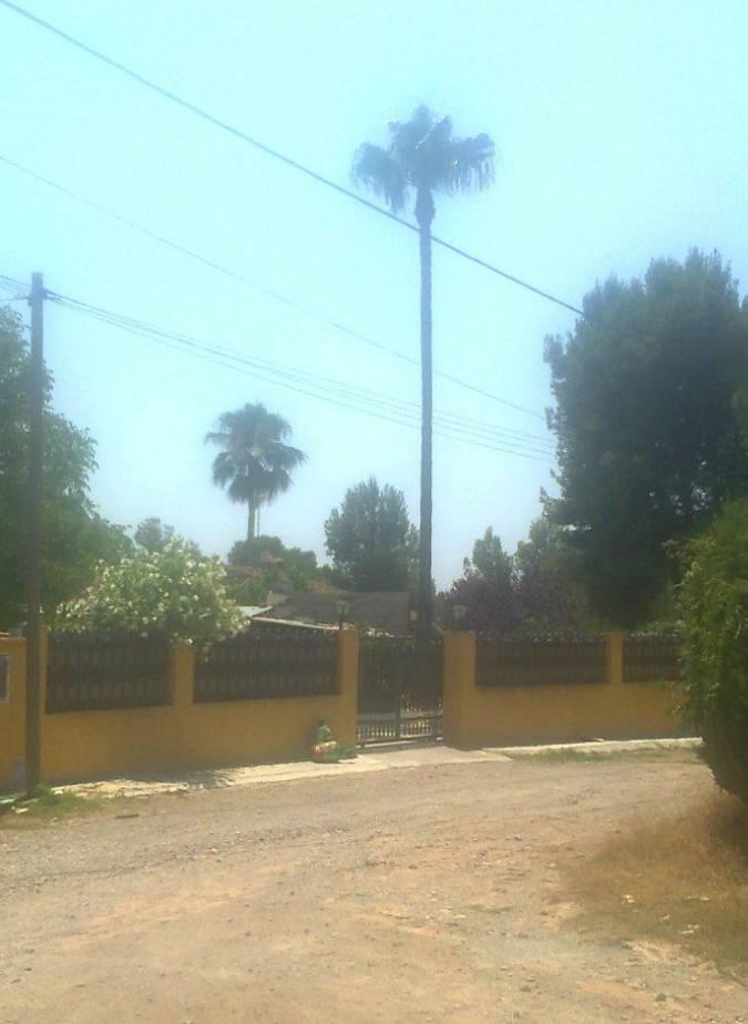 Foto 113 de Jardines (diseño y mantenimiento) en Valencia | Jardinería Vicente Salcedo