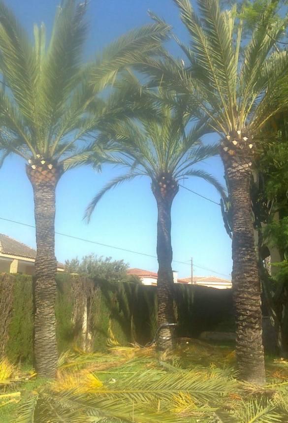 Foto 124 de Jardines (diseño y mantenimiento) en Valencia | Jardinería Vicente Salcedo