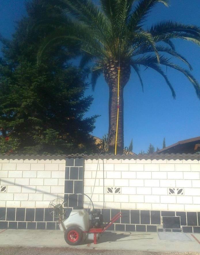 Foto 119 de Jardines (diseño y mantenimiento) en Valencia | Jardinería Vicente Salcedo