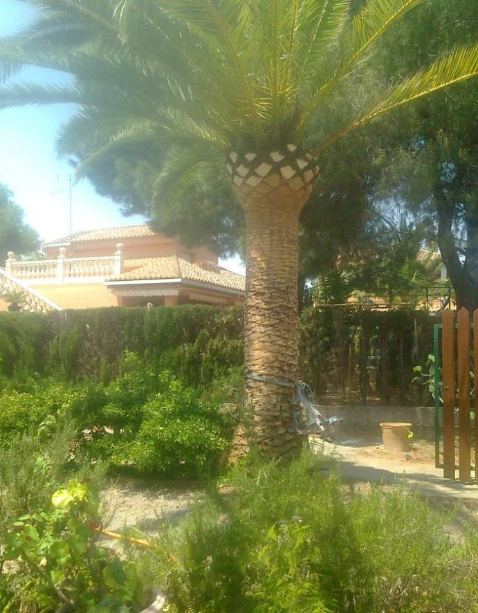Foto 121 de Jardines (diseño y mantenimiento) en Valencia | Jardinería Vicente Salcedo