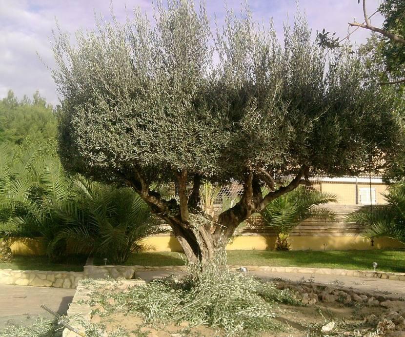Foto 122 de Jardines (diseño y mantenimiento) en Valencia   Jardinería Vicente Salcedo