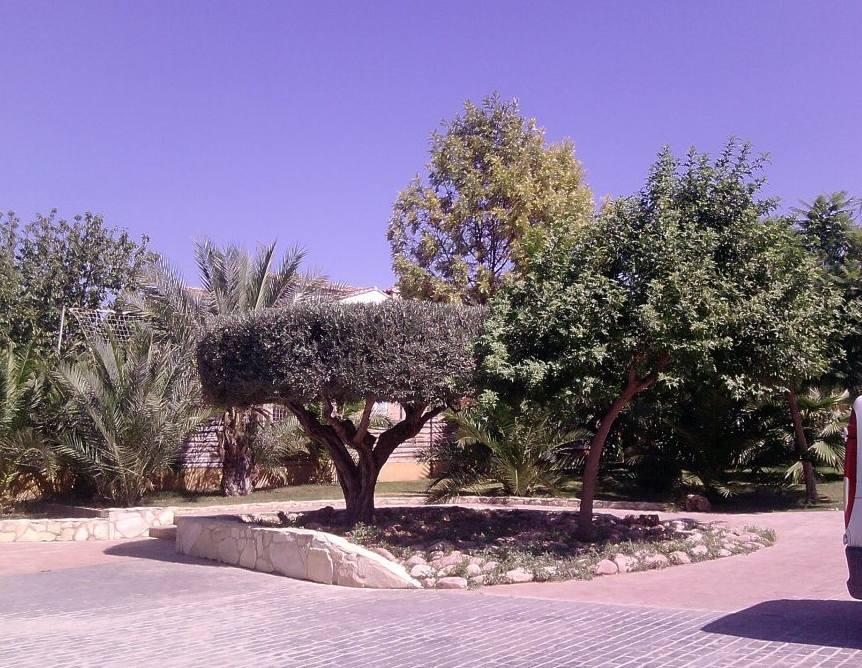 Foto 123 de Jardines (diseño y mantenimiento) en Valencia | Jardinería Vicente Salcedo