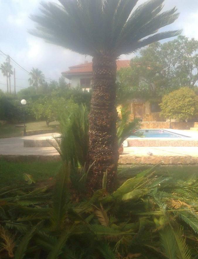 Foto 117 de Jardines (diseño y mantenimiento) en Valencia | Jardinería Vicente Salcedo