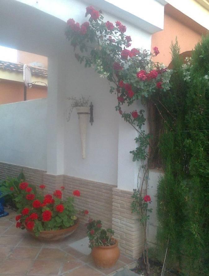 Foto 128 de Jardines (diseño y mantenimiento) en Valencia | Jardinería Vicente Salcedo