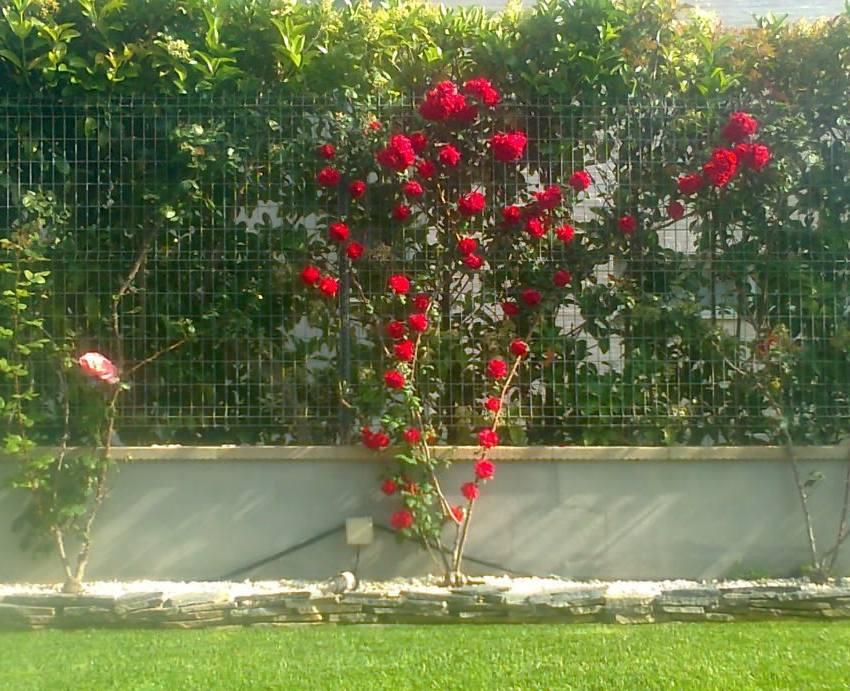 Foto 136 de Jardines (diseño y mantenimiento) en Valencia | Jardinería Vicente Salcedo