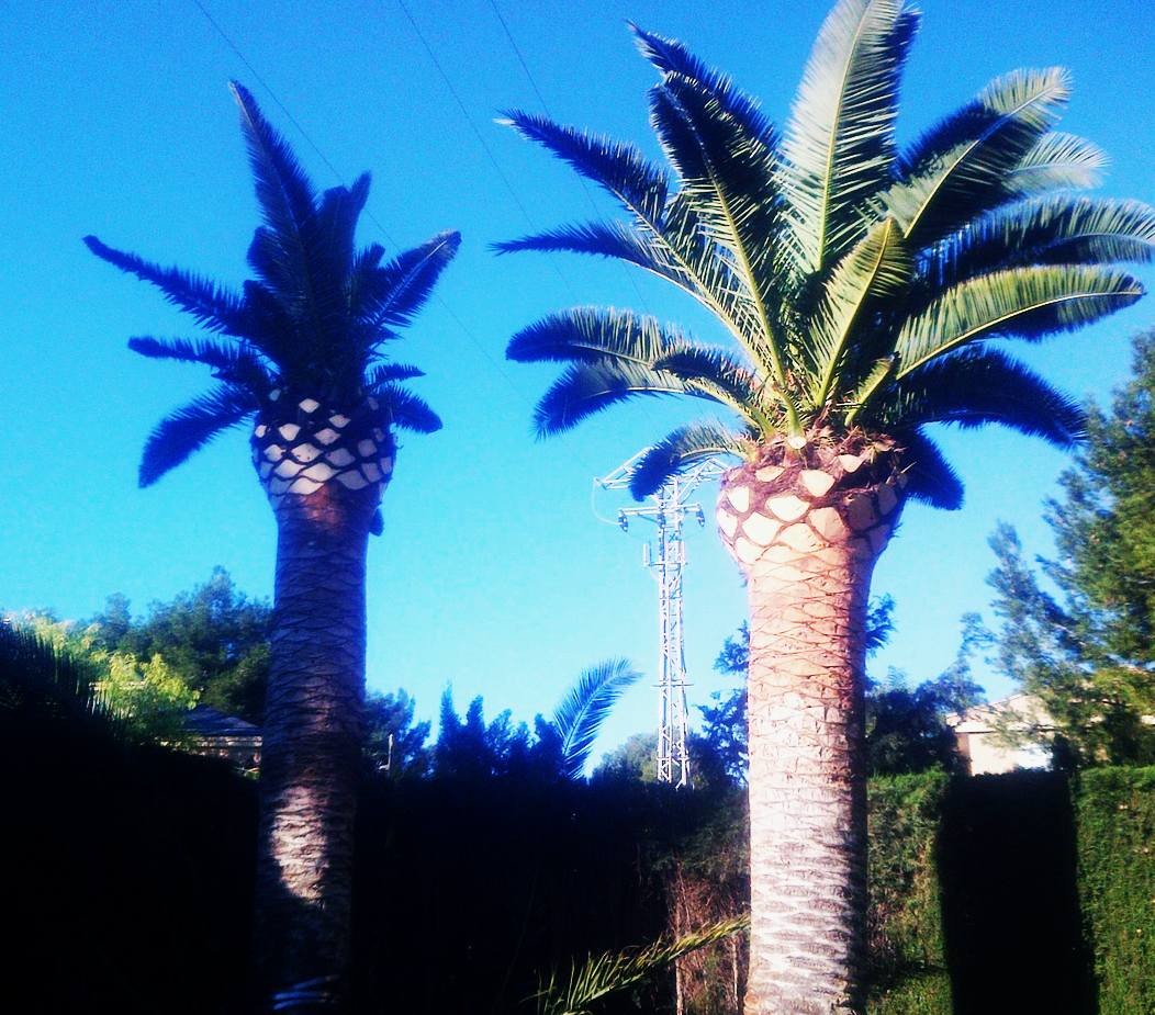 Foto 61 de Jardines (diseño y mantenimiento) en Valencia | Jardinería Vicente Salcedo