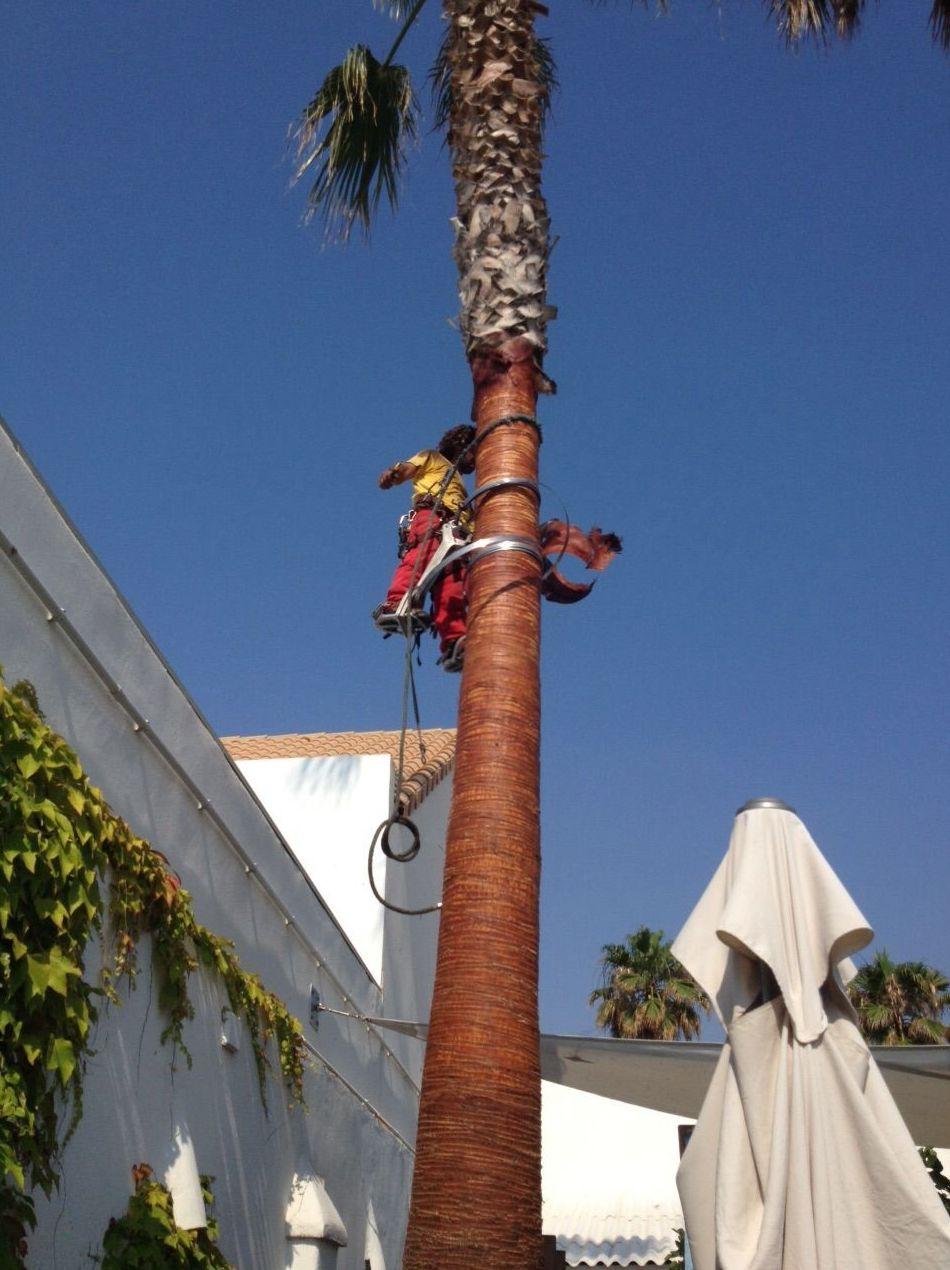 Foto 154 de Jardines (diseño y mantenimiento) en Valencia | Jardinería Vicente Salcedo