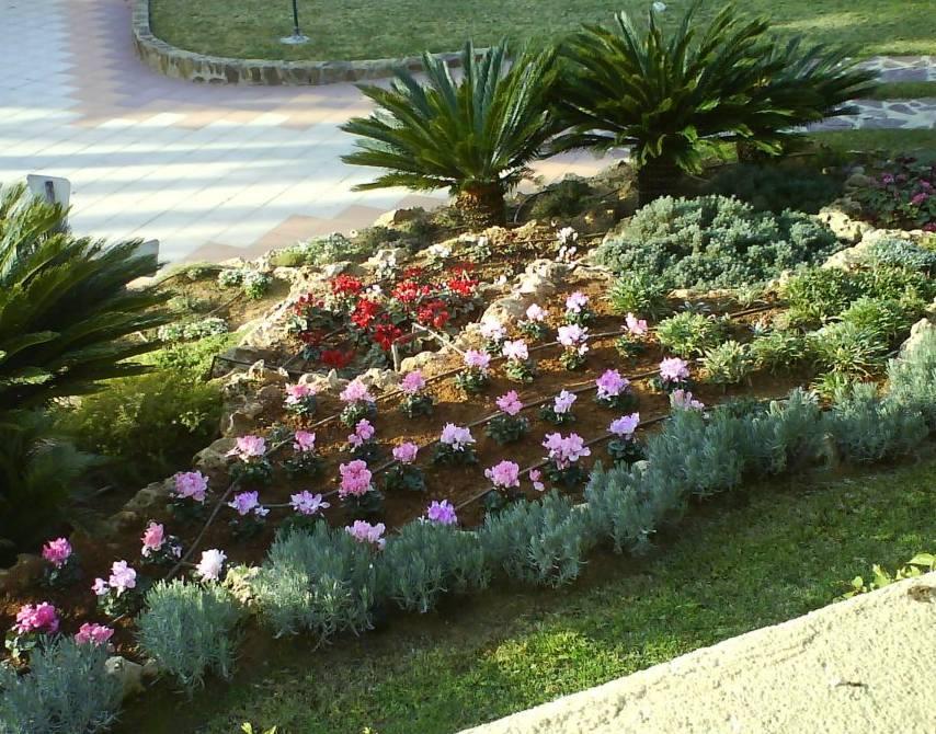 Foto 149 de Jardines (diseño y mantenimiento) en Valencia | Jardinería Vicente Salcedo