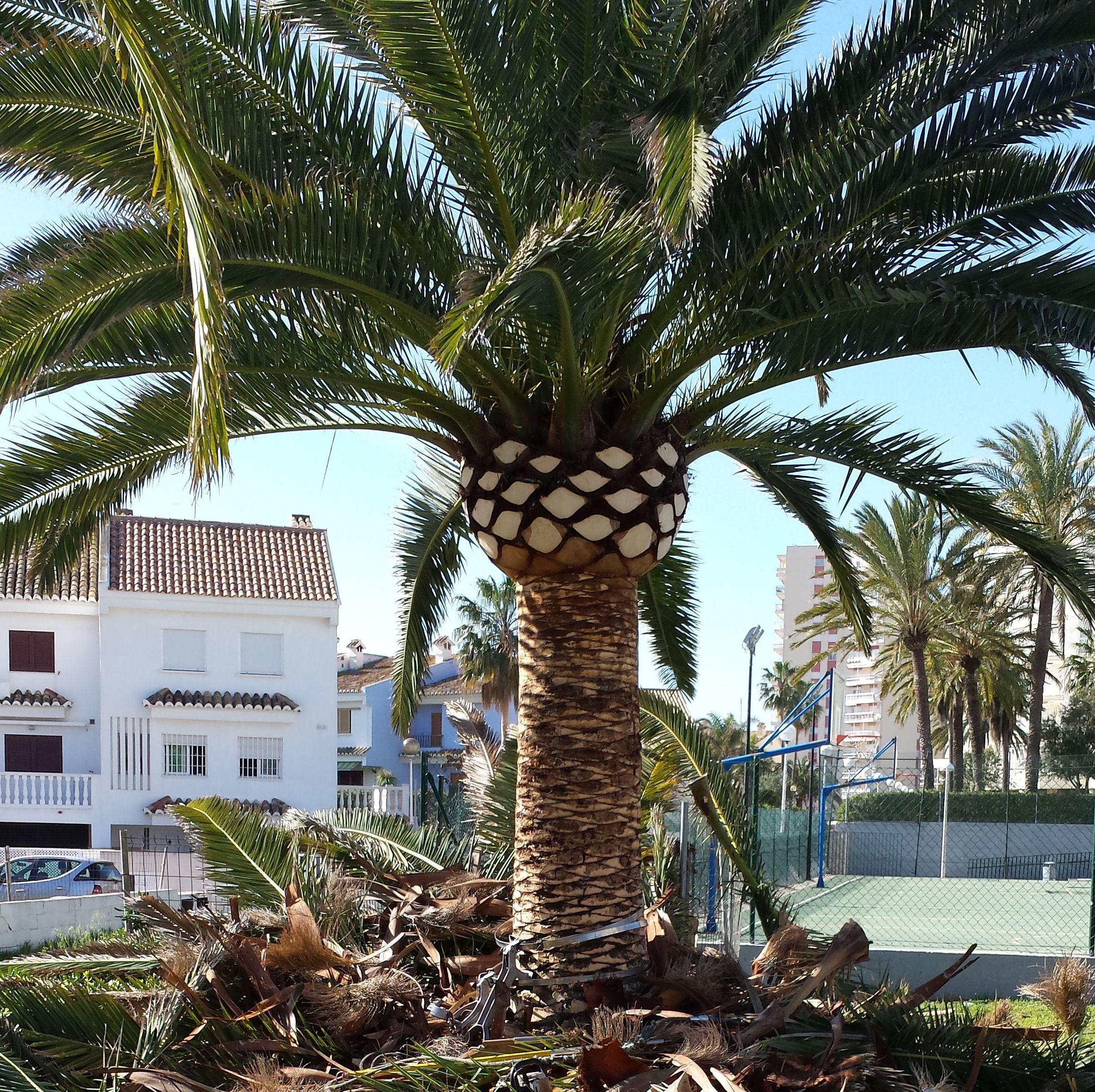 Foto 167 de Jardines (diseño y mantenimiento) en Valencia | Jardinería Vicente Salcedo