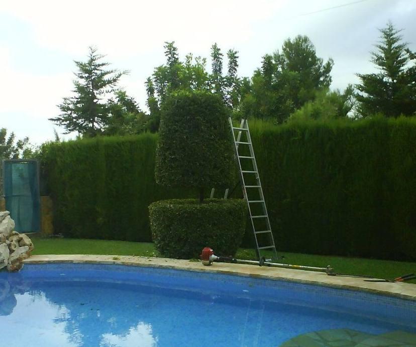 Foto 151 de Jardines (diseño y mantenimiento) en Valencia | Jardinería Vicente Salcedo
