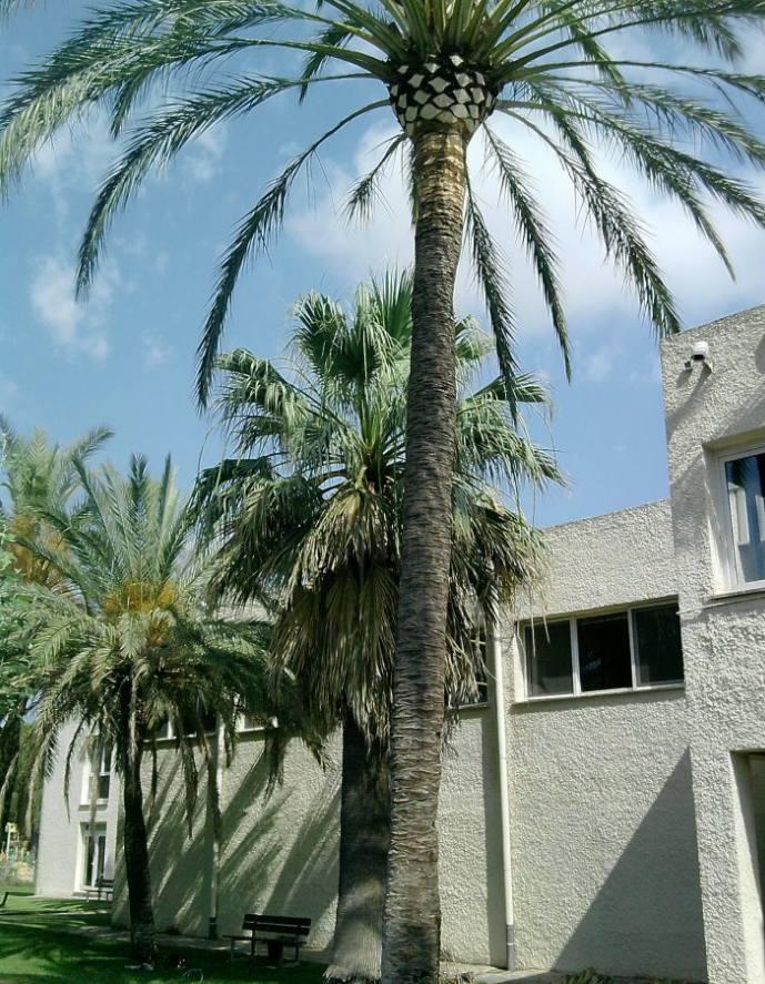 Foto 153 de Jardines (diseño y mantenimiento) en Valencia | Jardinería Vicente Salcedo